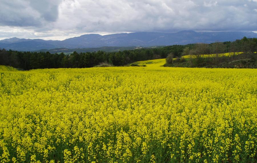 Bosques y cultivos ecológicos en la masia y casa rural El Torrent Solsones